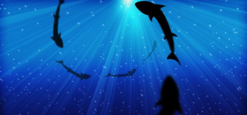 deep ocean sharks