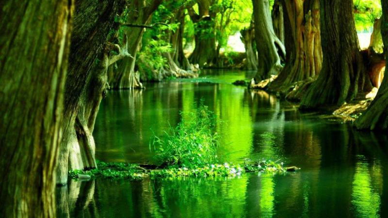 green forest quiet