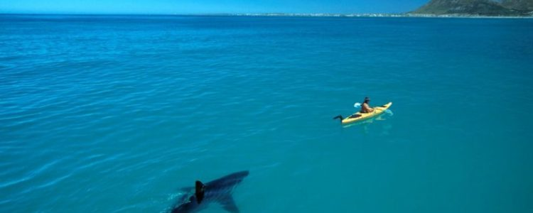 shark-in-water-canoe-under-boat-paddle-by-thomas-peschak