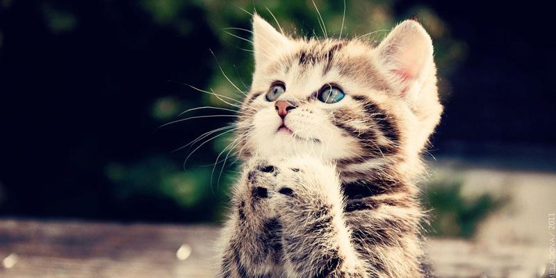 cute-cat-techreader