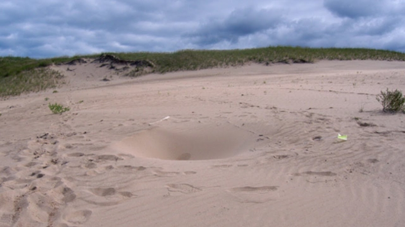 Mount Baldy's Randomly Appearing Holes | Mysterious Holes