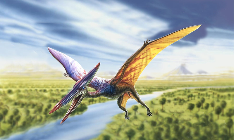 Most supposed flying dinosaurs are fictions